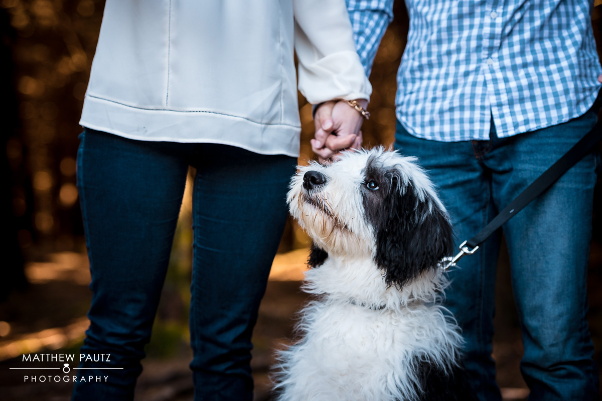 puppy-engagement-photos